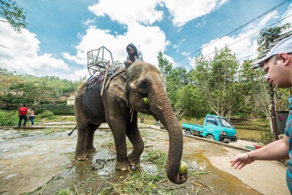 Далат 2 дня МАКСИ альфа турс экскурсии нячанг вьетнам (10)
