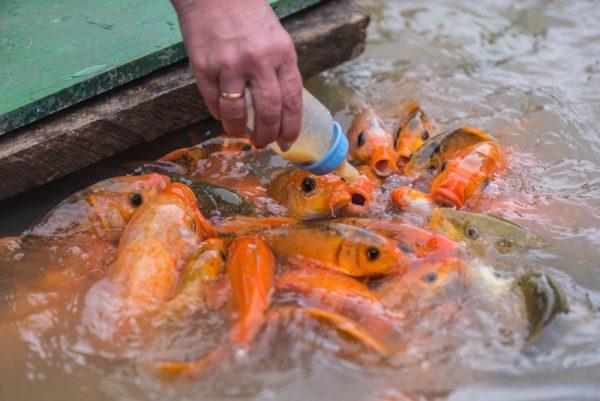 эко парк храм хон до альфа турс экскурсии нячанг вьетнам (1)