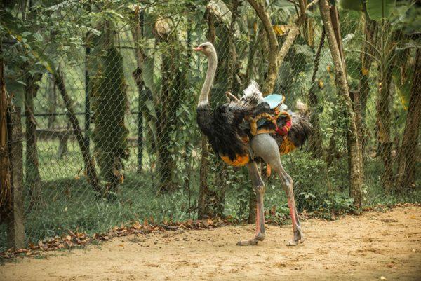 эко парк храм хон до альфа турс экскурсии нячанг вьетнам (21)