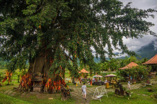 эко парк храм хон до альфа турс экскурсии нячанг вьетнам (29)