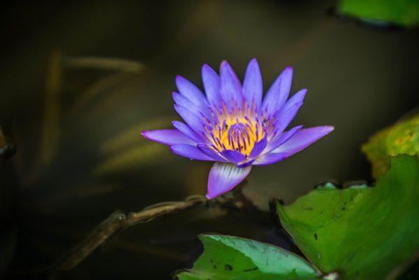 эко парк храм хон до альфа турс экскурсии нячанг вьетнам (4)